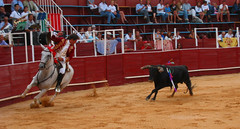 performing arts(0.0), animal sports(1.0), bull(1.0), event(1.0), tradition(1.0), sports(1.0), bullring(1.0), horse harness(1.0), entertainment(1.0), matador(1.0), performance(1.0), bullfighting(1.0),