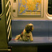 Twiggy on the subway by mbrandonw
