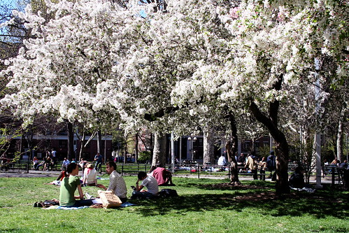 people sitting under trees in bloom