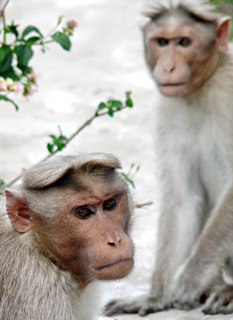 Images Of Monkey Baby Shower Cakes