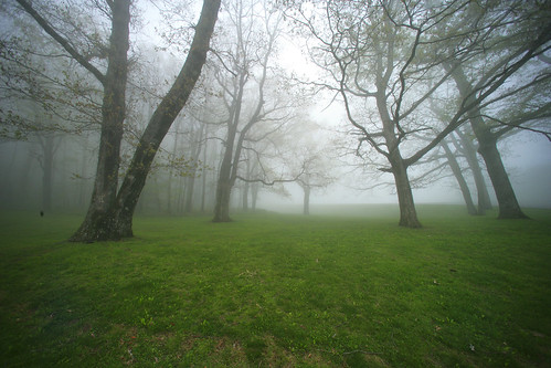 trees cloud mist nature rain fog forest landscape nationalpark spring northcarolina parkway appalachian blueridge crabtreemeadows iptclightandfog