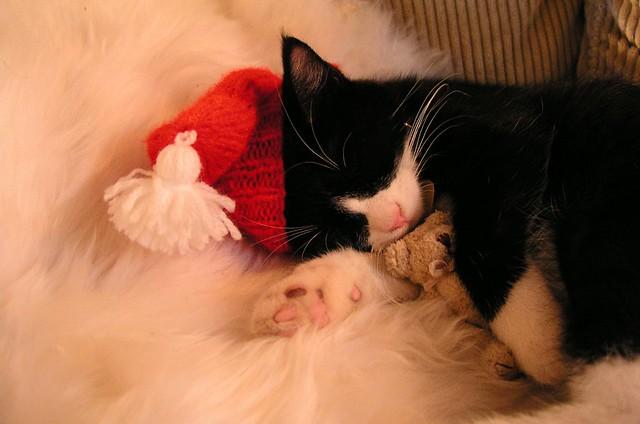Merry sleepy christmas!