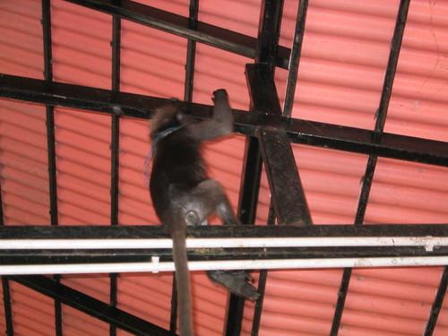 thailand, railay, monkeys IMG_1177.JPG