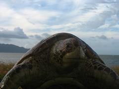 Turtle Onda Beach