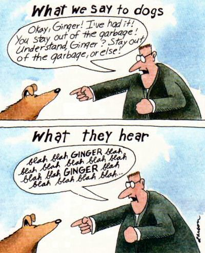 Larson: what dogs hear