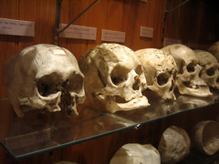 anthropology, jaw, bone, skull,