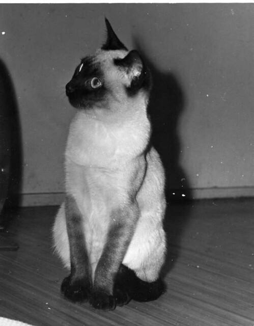 Mr. Sim Jan. 1966