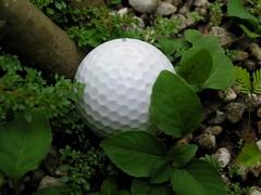 Campaspe Golf Club
