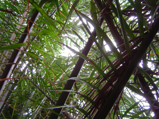 A view up through the canopy in the Eden Project's tropical biome