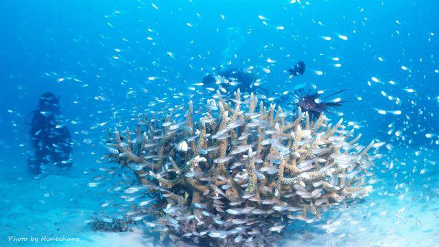 小魚いっぱいw