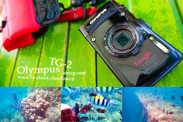 玩水浮潛必備防水相機 Olympus TG-2 來機長私藏租借好方便