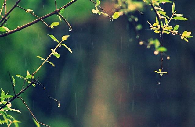 A tear, a tempest..