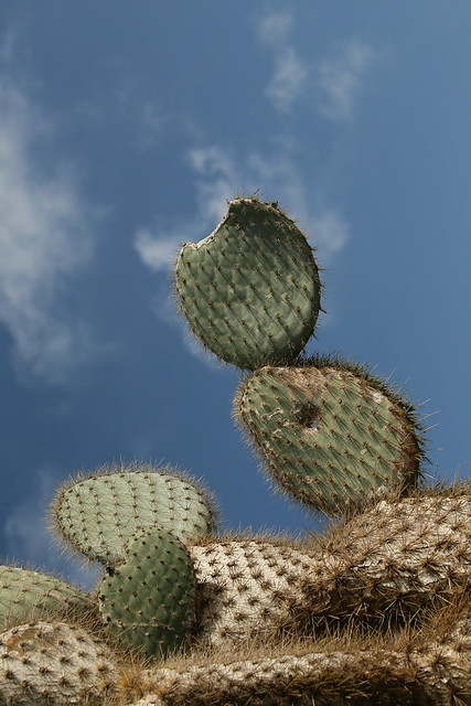 Cactus, Galapagos Islands, Ecuador