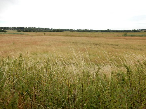 Pulborough reserve