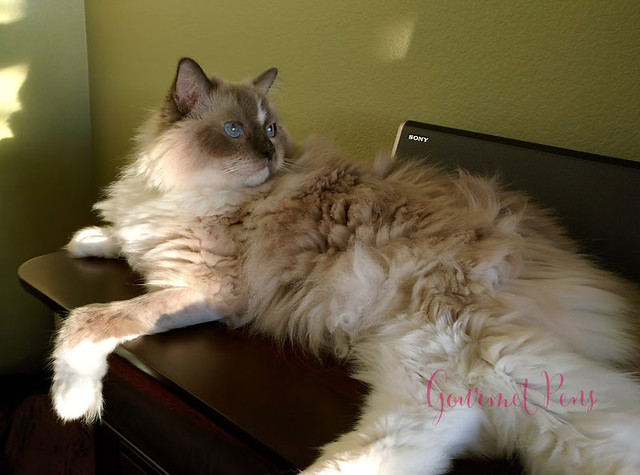 Whiskers & Paws December 2016 Edition (2)