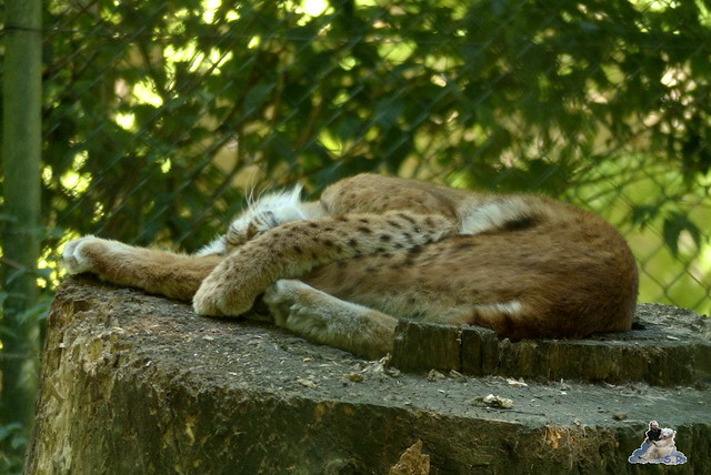Tierpark Perleberg 09.08.2015 106