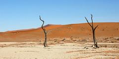 DSC02808 - Namibia 2010 Sossusvlei