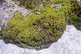 Stone Mtn plant 2