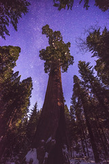 The Heavens and the Sequoia - Grant Grove, January 2017