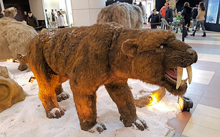 Saber-toothed tiger (20170121_114439 1PS)