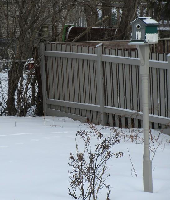 ** Un intrus dans notre cour/ An intruder in our yard **