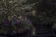 Le jardin noir - Bureau d'études Horticulture & Jardins - Jardins Jardin 2015 aux Tuileries - Paris