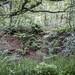 Undergrowth by Briggate.com