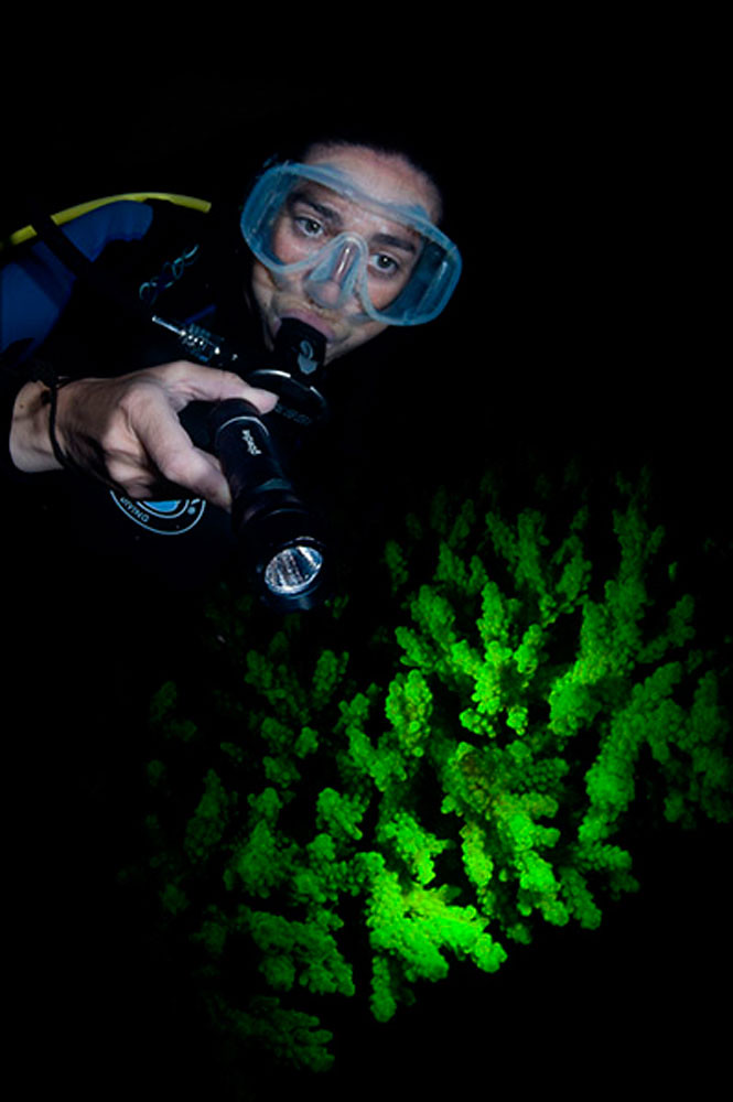 24-uv-night-dive1-vialutwala.com
