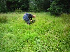 HolderMeadow surveying and seed collecting at the new meadow