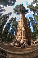 Sequoia National Park 2015