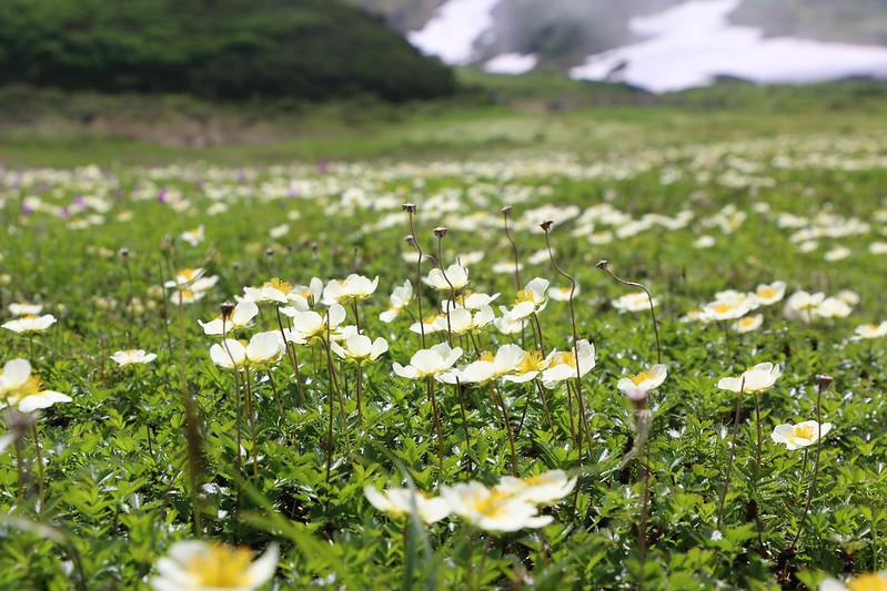 2014-07-20_01166_北海道登山旅行.jpg