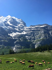 Jungfrau0014