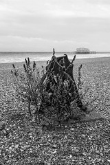 West Pier bw=titled