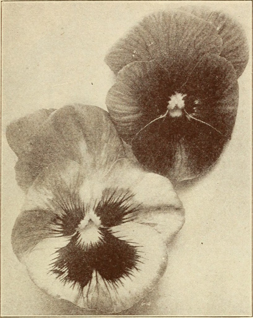 IMAGE FROM PAGE 16 OF BOLGIANO S BULBS PLANTS SEEDS FOR F