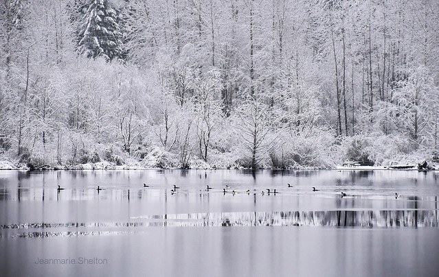 Gray Snow Day