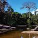 LANDSCAPE TAPANAHONY RIVER SURINAM AMAZONE SOUTH-AMERICA