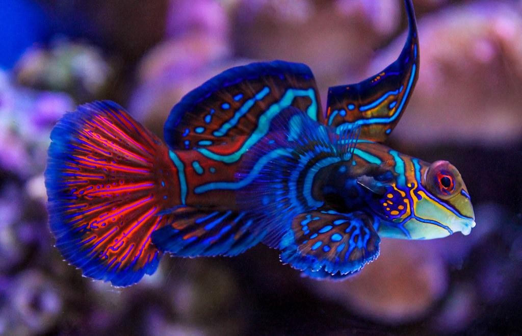 Beautiful Fish The Most Beautiful Fish At The Aquarium