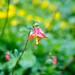 Columbine by Mark Griffith
