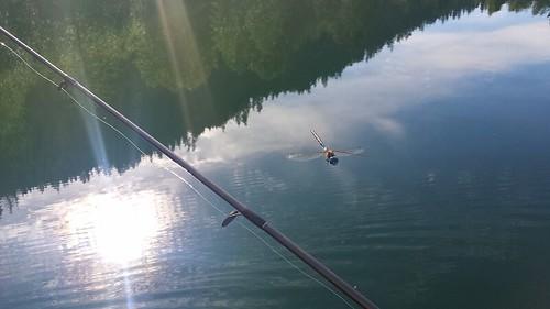 water fishing dragonfly rod bluelakebostonbar