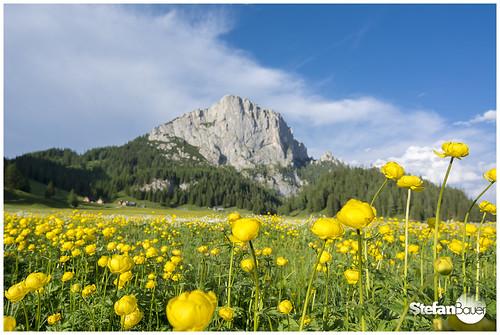 flowers blue sky mountain yellow austria österreich blumen front berge wurzeralm stubwieswipfel