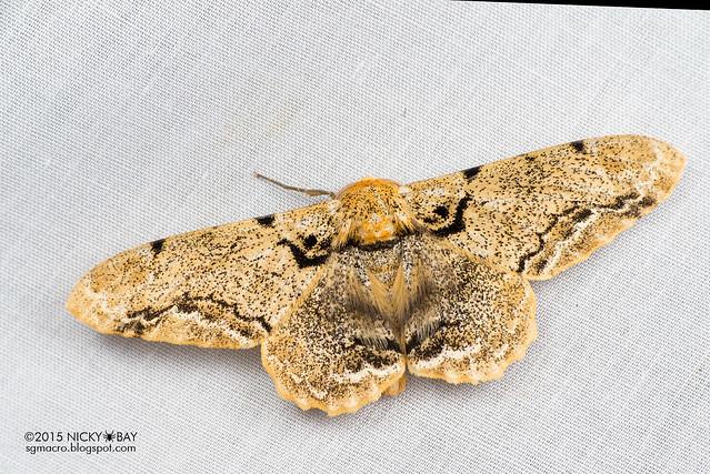 Moth - DSC_4065