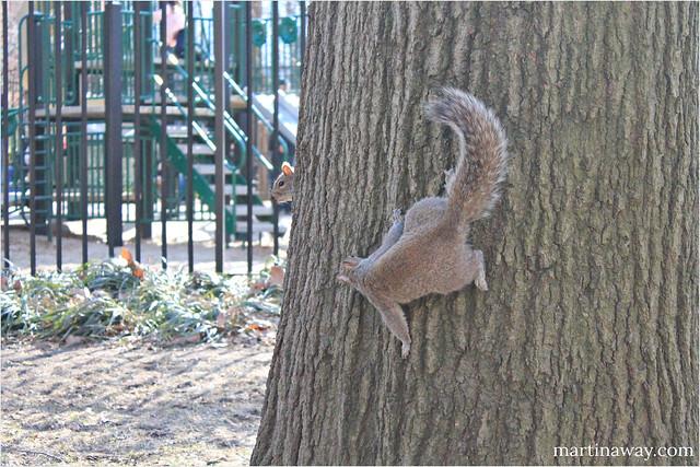 @ Washington Square Park.