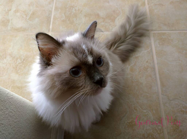 Whiskers & Paws June 2016 Edition (4)