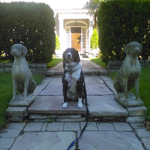 Bilbo, with statues #dogs #toronto #russellhillroad #foresthill #statues