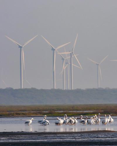 mikaelbehrens bird landscape wildlife texas cbc corpuschristi unitedstates us