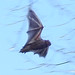 Small photo of Red bat, light, cropped