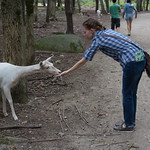 Emily and the deer
