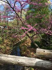 Bronx Zoo Creek