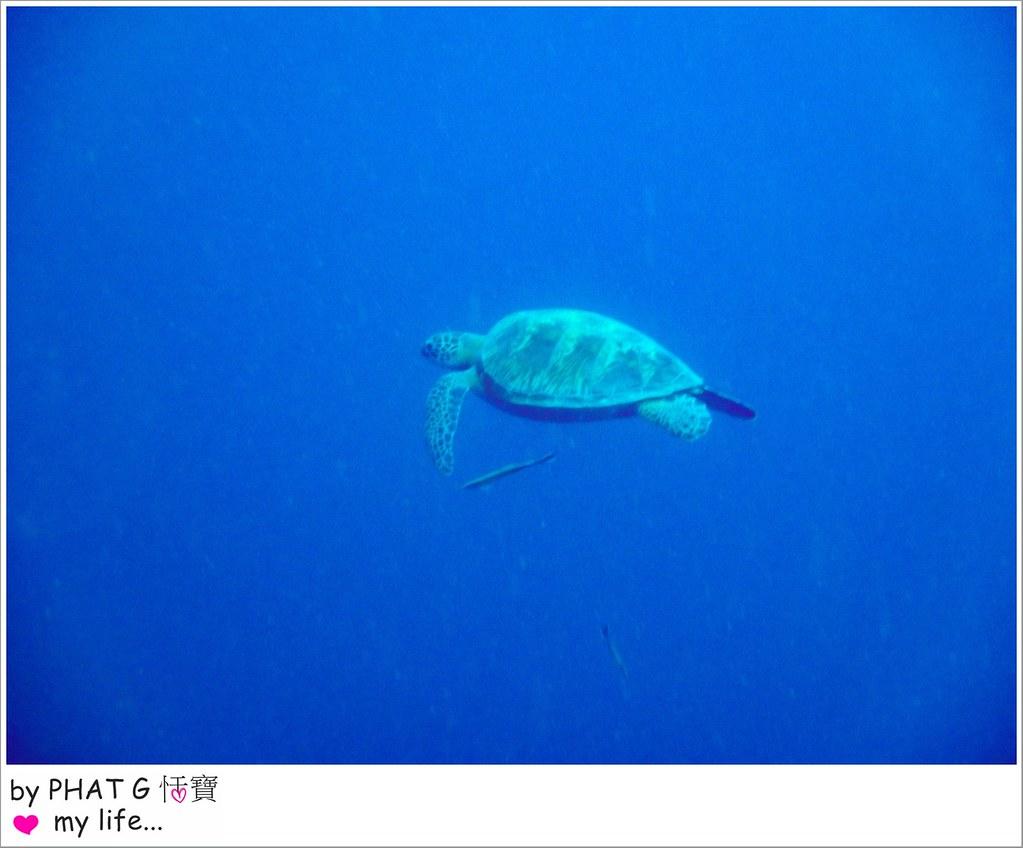 沙丁魚 13-2