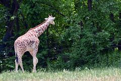 Bronx Zoo_2015 05 24_0106